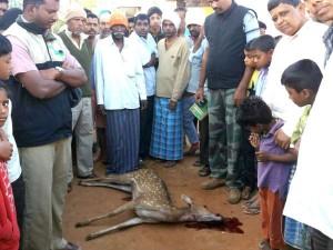 Deer Dies In Dog Attack In Kollegal