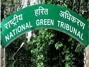 If You Are Unplanted 21 000 Saplings Yettinahole Planning Is Cancel Ngt
