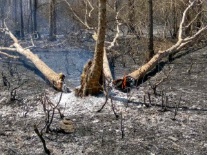 Bandipur Fire Break Made Life Of Many Miserable