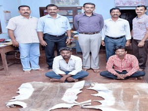 Smuggling Of Black Buck Skin Two Arrested In Puttur