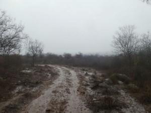 Rain In Gundlupet Talku Hopes Raise In Farmers