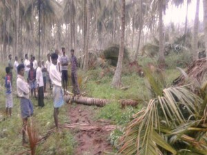 Several Coconut Trees Fall After Heavy Rain In Kr Pete Taluk