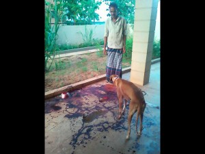 Leopard Attack On Dog In Saragur House