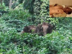 Wild Elephant Killed A Man In Kodagu