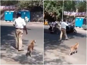Video Dog Wants Cross The Road Traffic Police Stops Vehicle To Help