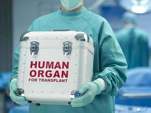 How To Donate Organs After Death