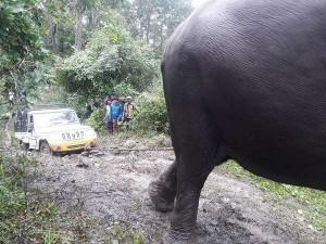 Pickup Vehicle Toe By Elephant Abhimanyu