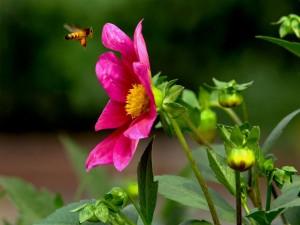 Unique Flower Gardens In Germany