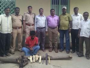 The Chamarajnagar Forest Police Arrests Sandalwood Smuggler In Gundlupet