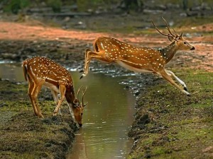 Bandipur National Park Attracting Tourists This Monsoon Season