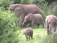 Elephant census begins on May 7 in southern states